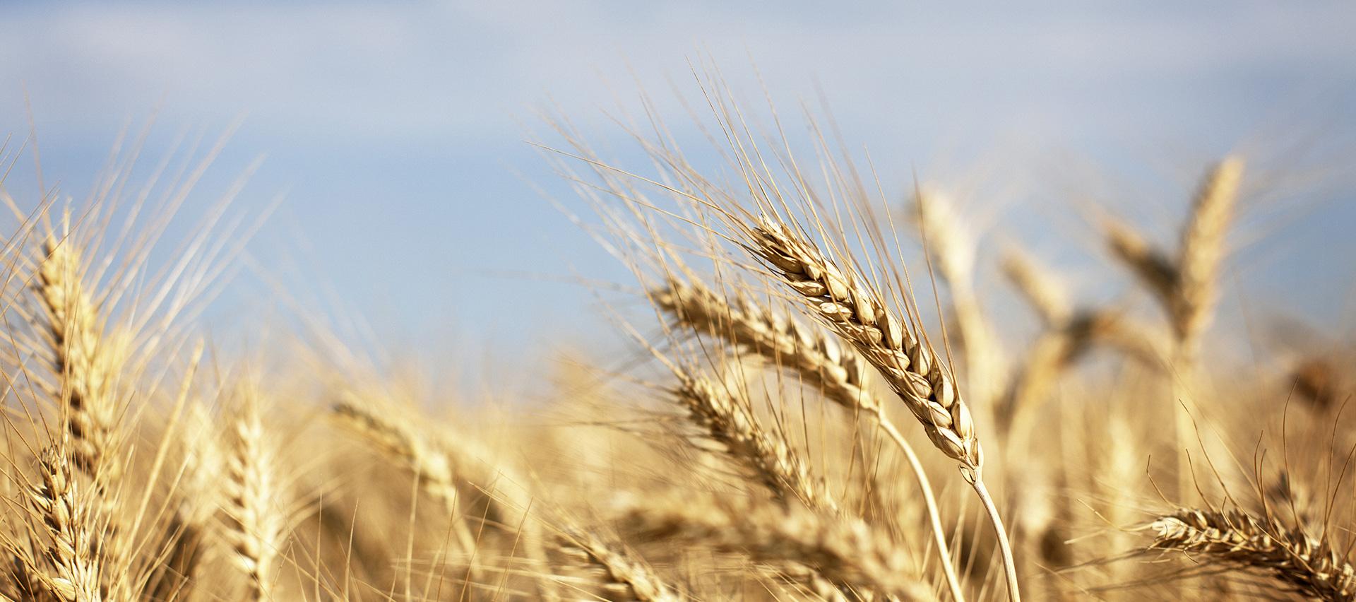 slide-crop-insurance